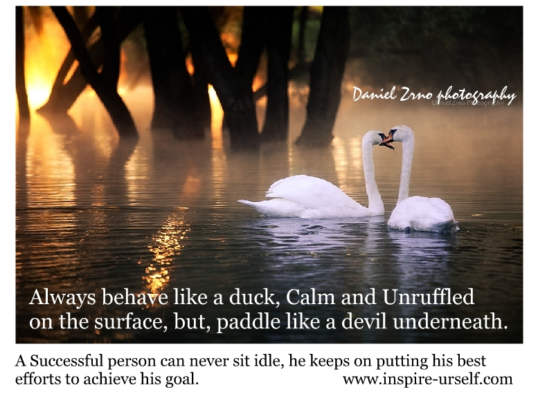 Be Calm Like A Duck Inspire Urself